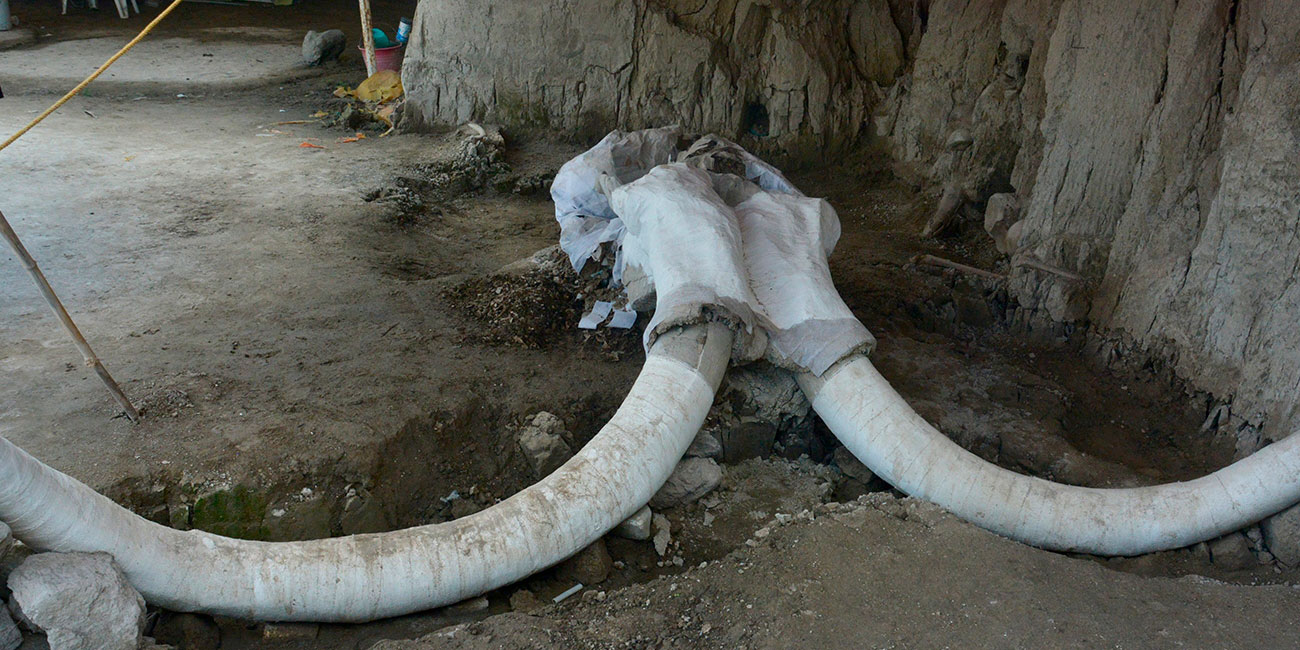 Encuentran 60 mamuts en Santa Lucía * Página Central