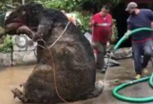 Photo of Encuentran 'rata' gigante entre la basura tras intensas lluvias